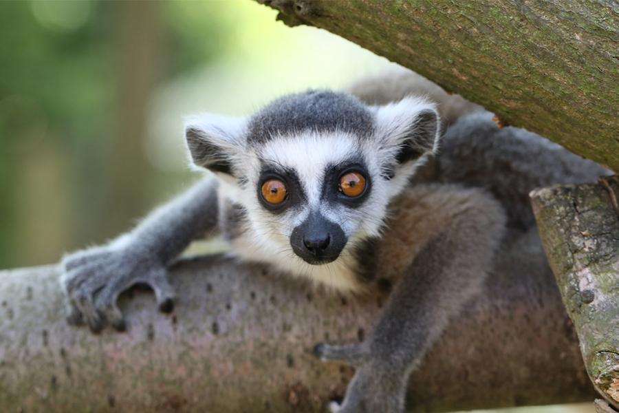 Celodenní vstup do Zooparku Zájezd s lemury i surikatami